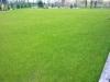 zakładanie trawnika sianego- efekt po pracach firmy ogrodniczej secret-garden