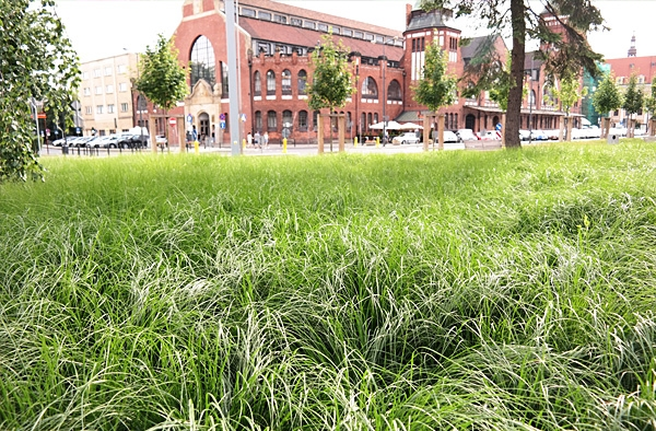 rośliny okrywowe, wysokie trawy