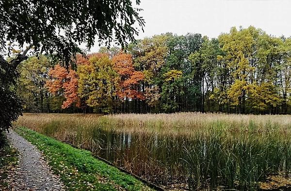 drzewa w jesień