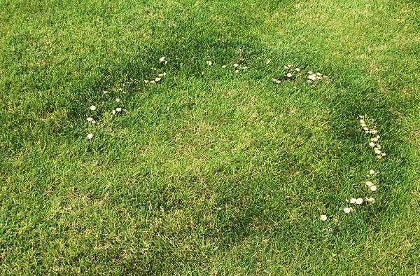 choroby trawnika czarcie