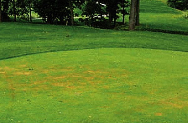 choroby trawnika antrykoza