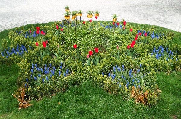 rośliny cebulowe na wiosnę