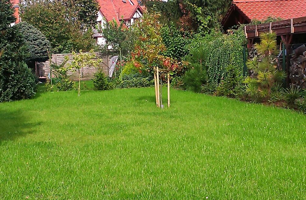 05gęsty trawnik po założeniu
