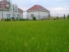 zakładanie trawnika sianego- firma ogrodnicza secret-garden