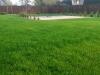profesjonalne zakładanie ogrodu- trawnik idealny