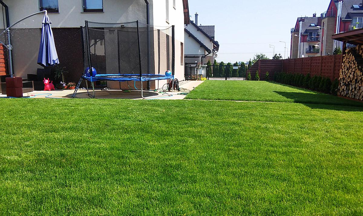 trawnik z rolki medlow4