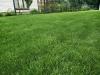 4-trawnik-wroclaw
