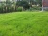 zakładanie trawnika efekt trawa siana Wrocław