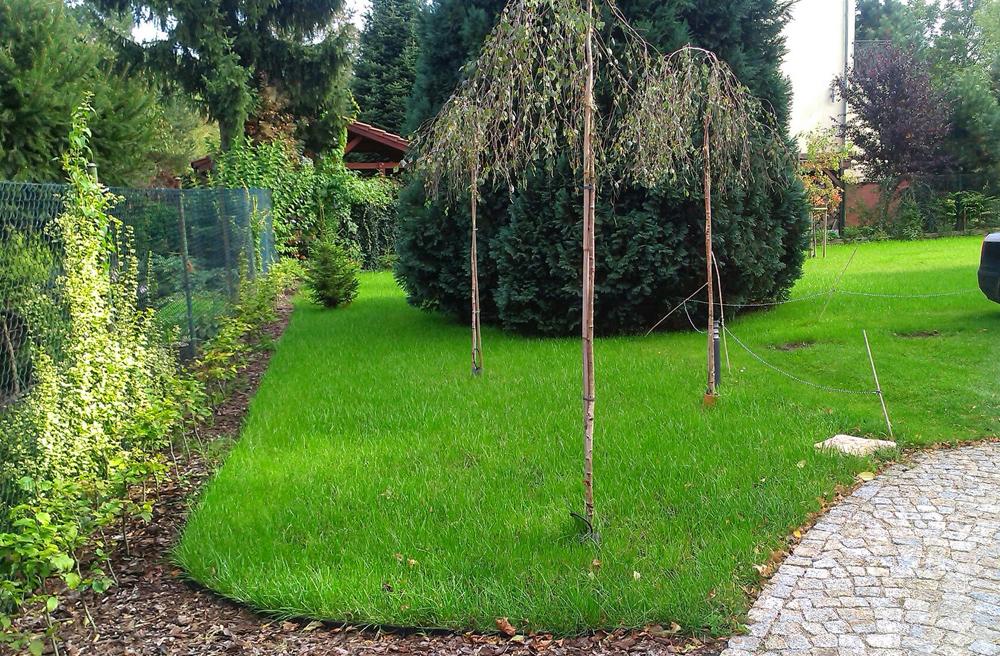04ładny trawnik po dwóch miesiącach