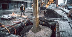 zaopatrzenie drzew w wodę